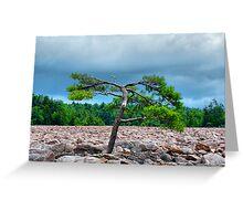 HDR Tree Greeting Card