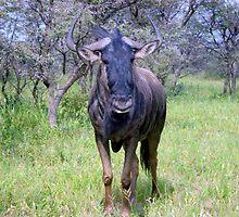 Blue Wildebeest by Irene  van Vuuren