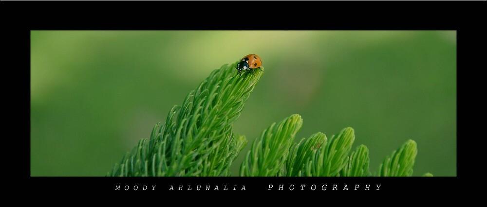 Untitled by moodywalia