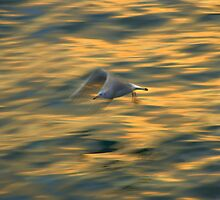 seagull on bosphorus by Mustafa UZEL