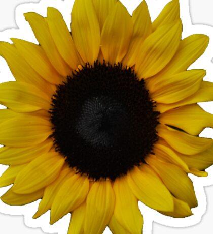 Beautiful Sun flower Sticker
