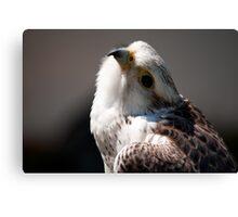 Birds of Prey Series No 3 Canvas Print