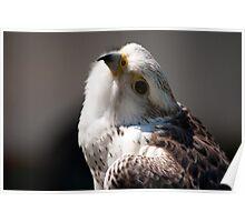 Birds of Prey Series No 3 Poster
