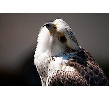 Birds of Prey Series No 3 Photographic Print