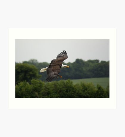 Birds of Prey Series No 5 Art Print