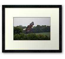 Birds of Prey Series No 5 Framed Print