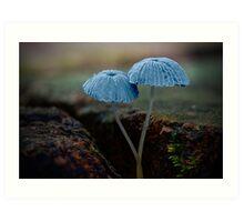 Fungi Season 1112 Art Print