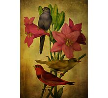 Tender Lilies Photographic Print