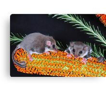 """ FEATHERTAIL GLIDER "" Canvas Print"