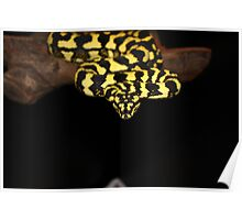 Jungle Python Poster