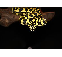 Jungle Python Photographic Print