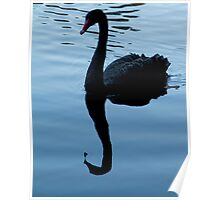 Black Swan at Hyde Park, Northbridge W.A. Poster