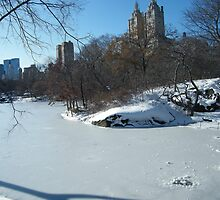 NY February Central Park, Snow View by lenspiro