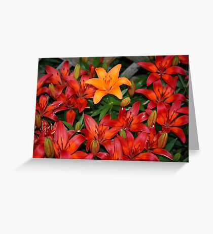 Stray Color Greeting Card