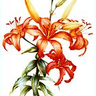 Orange Asiatic Lilly by Sarah Trett