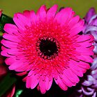 Perfectly Pink by Liza Barlow