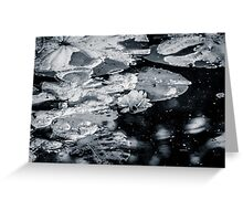 Rose floating among the water lilies Greeting Card