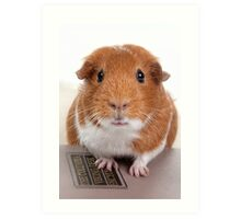 Guinea Pig Gets An Education  Art Print