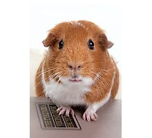 Guinea Pig Gets An Education  Photographic Print