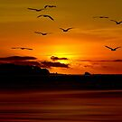 THE BIRDS OWN THE SKY by RoseMarie747