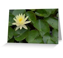 Light Yellow Water Lily Greeting Card