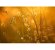 Late Afternoon Light, Undara Photographic Print