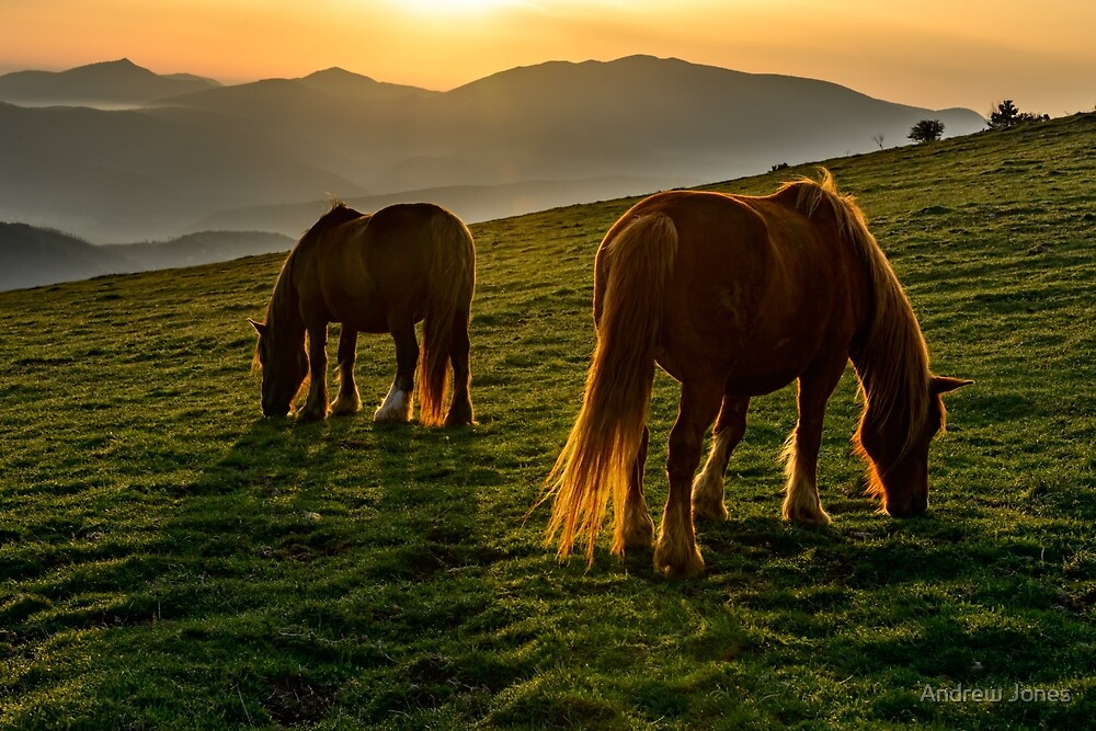 A nice spot to graze, sunrise over Monte Subasio, Umbria, Italy by Andrew Jones