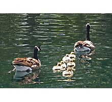 Goose Family Photographic Print
