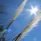 Beautiful Grasses and Bluest Sky Ever... by Debbie Robbins