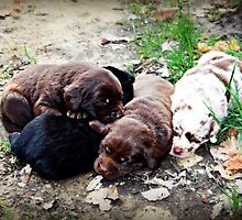 Coco's Puppies by Jennifer Rhoades