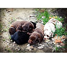 Coco's Puppies Photographic Print