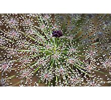 Toothpick Flower Detail Photographic Print