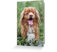 Paddy the one eyed Nova Scotia Duck Tolling Retriever Greeting Card