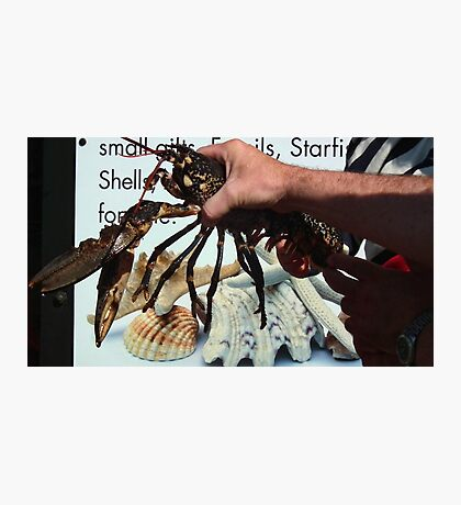 Lobster Show Photographic Print