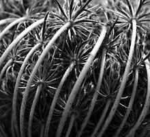 Toothpick Flower Detail #3 by Noam Gordon