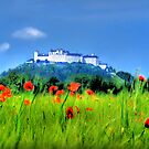 Salzburg Poppies by Luke Griffin