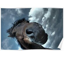 Dramatic horse Poster