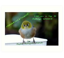 Top 10 Challenge Winner Banner - Silvereye - NZ Art Print