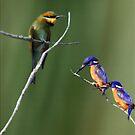 The Colourful Shore-dwellers! by byronbackyard