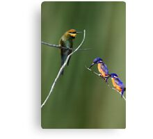 The Colourful Shore-dwellers! Canvas Print