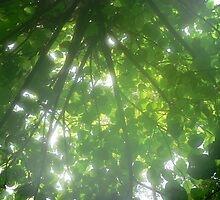 Light through the Leaves by louisegreen