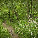 Spring Garden Path by Marilyn Cornwell