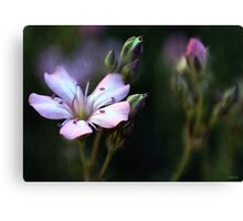 Pink Flower Buds Canvas Print
