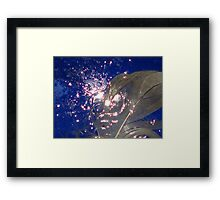 feather wet on blue Framed Print