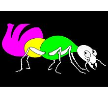 Brightly Colored Ant Photographic Print