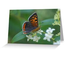 Small Copper Greeting Card