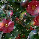 Floating Beach Plum Roses by Debbie Robbins