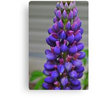 Lupin - Beads and Ribbons Canvas Print