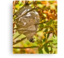 HORNET AND NEST Canvas Print