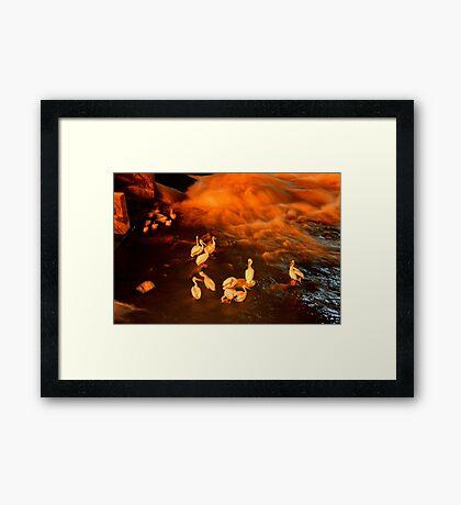 b.6/5/11 Framed Print